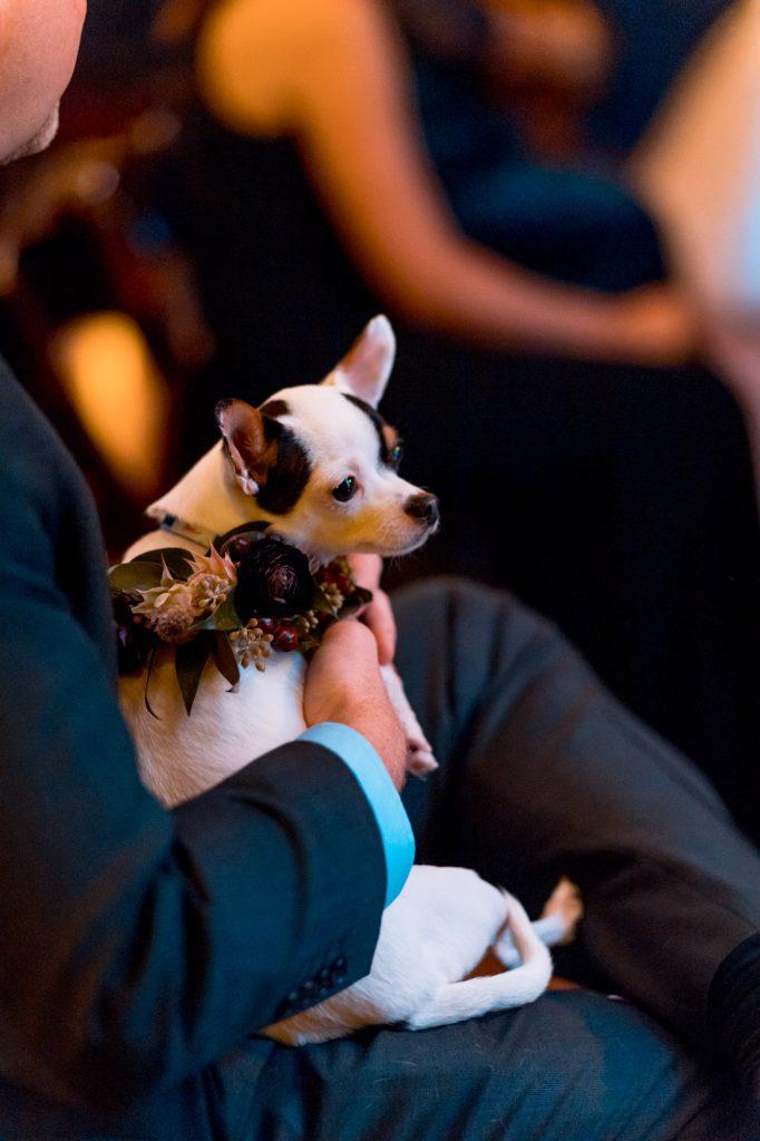 wedding puppy, austin wedding dogs, milwaukee wedding dogs, dogs in flower collars, dogs in flower crowns, wedding dog flower collar, studio k10, austin wedding photographer, milwaukee wedding photographer